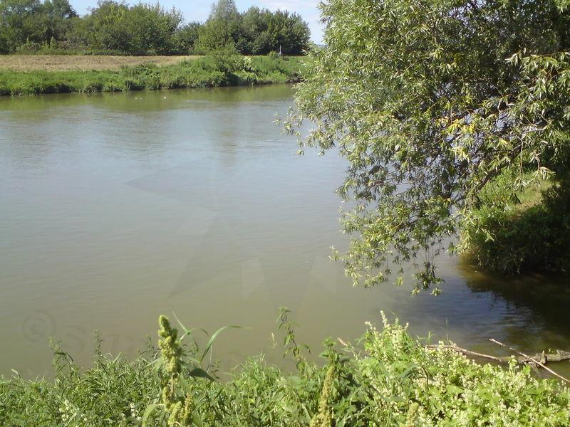 Morava veseli 01 potok zvaný svodnice posiluje řeku moravu